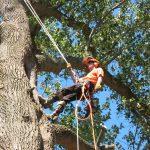 tree service cost calculator