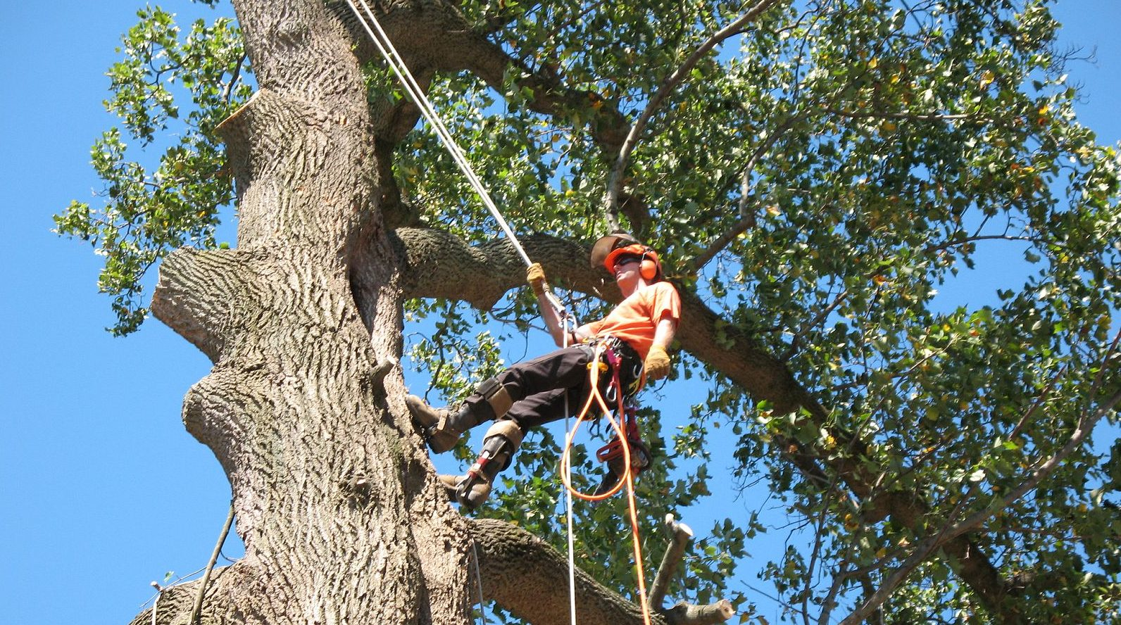 tree service cost calculator