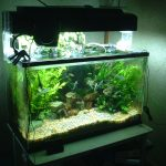taking care of aquarium plants
