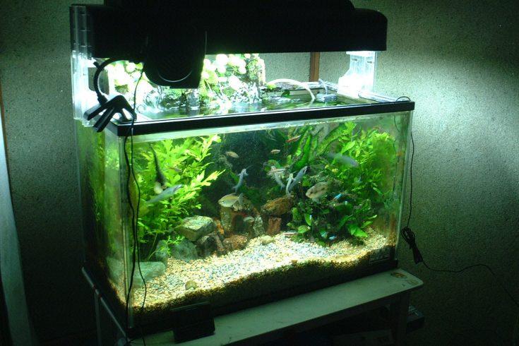 taking care of aquarium plants