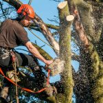 tree-removal-cost
