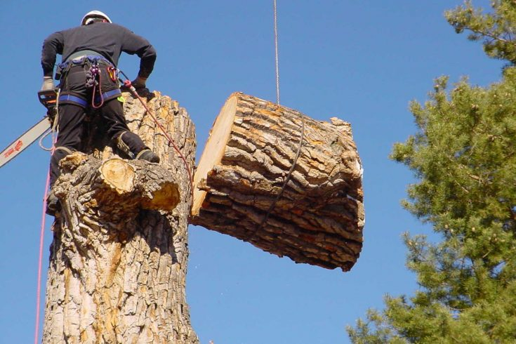 tree cutting service reviews