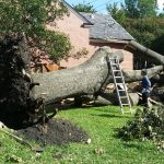 how to find a good tree removal service