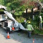 Tree Service In City